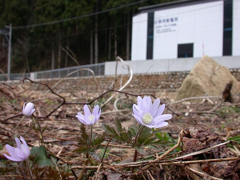 出資者からおひさまエネルギーファンドに寄せられた立山アルプス小水力発電所(写真:おひさまエネルギーファンド)