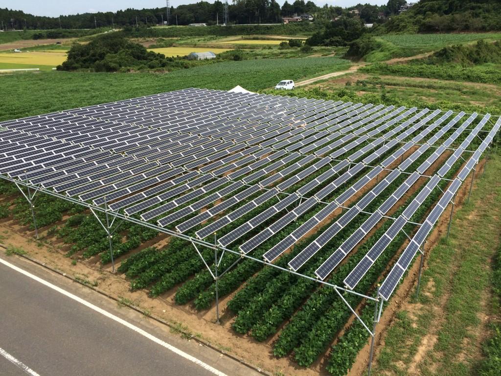 全国初の市民共同ソーラーシェアリング設備「匝瑳第一発電所Sun Agri」35kw。隙間広く空中にパネルがあることで温度上昇が抑えられ設備1kwあたり1200kwh/年の発電予想値となっている。